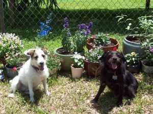 Pups in a Florida Garden